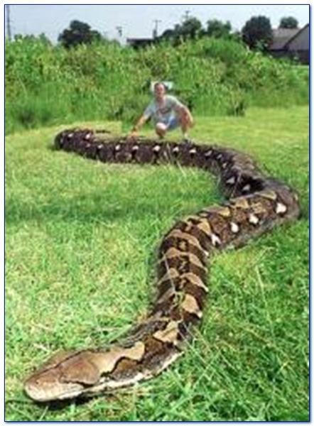 най-дълга змия