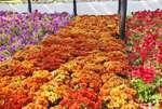 паркът-с-най-много-висящи-кошници-с-цветя