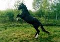 аз-искам-да-препускам-на-черен-кон