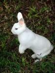 аз-искам-да-имам-бяло-зайче