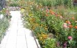 аз-искам-градина-с-много-цветя