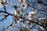 изпълнено-истинска-пролет-хареса-ми