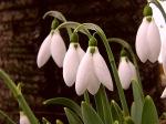 аз-искам-букет-от-пролетни-цветя