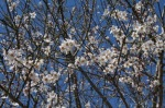 аз-искам-да-мирише-на-пролет