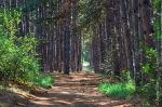 аз-искам-разходка-в-гората