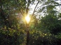 аз-искам-слънце