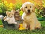 аз-искам-котенце-или-кученце