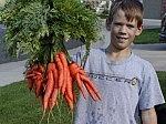 аз-искам-натурален,-прясно-изцеден-сок-от-моркови