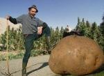 аз-искам-да-мина-с-фадрома-и-рало-през-терена-на-армията-и-да-посея-картофи