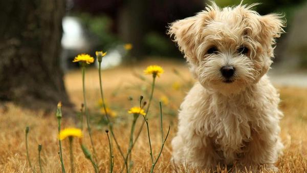 сладки животни
